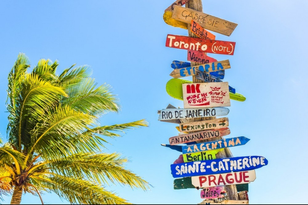 palm tree sign post